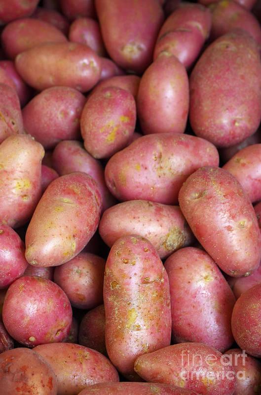 Farm Art Print featuring the photograph Red Potatoes by Carlos Caetano