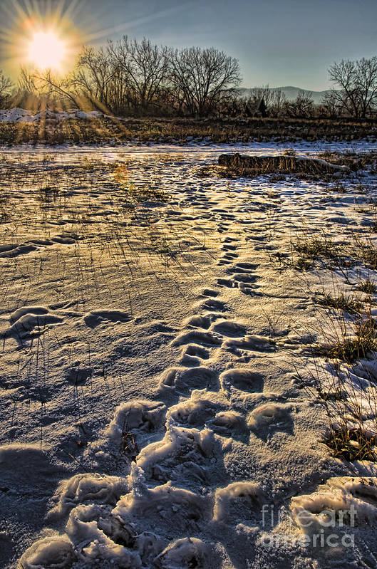 Winter Art Print featuring the photograph Sunset Shadows by Baywest Imaging