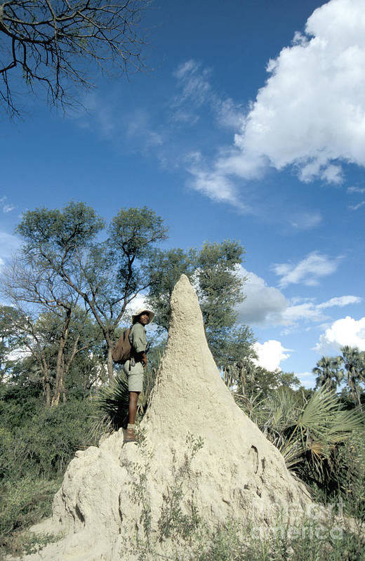 Fauna Art Print featuring the photograph Termite Mound by Mark Newman