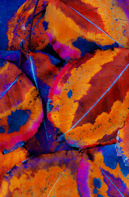 Leaf Art Print featuring the photograph Turning Leaves 5 by Stephen Anderson
