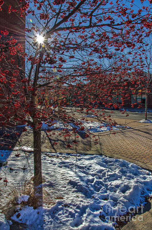 Old Town Art Print featuring the photograph Winter Berries by Baywest Imaging