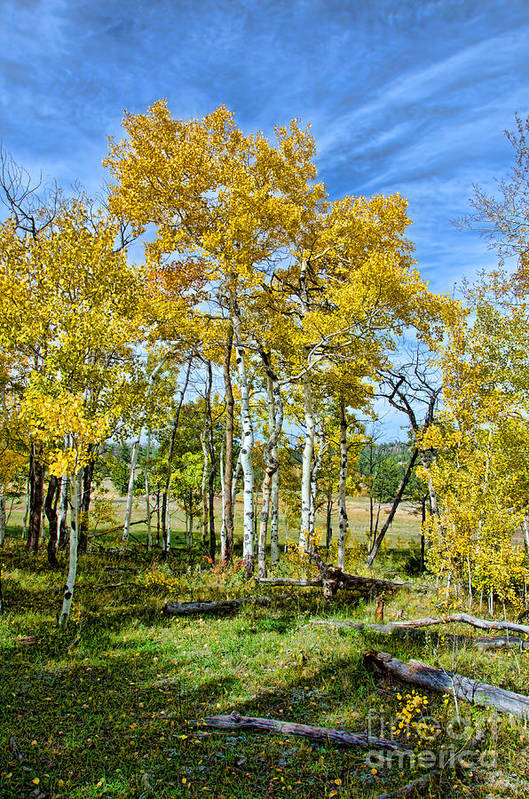 Fall Color Art Print featuring the photograph Yellow Tree by Keith Ducker
