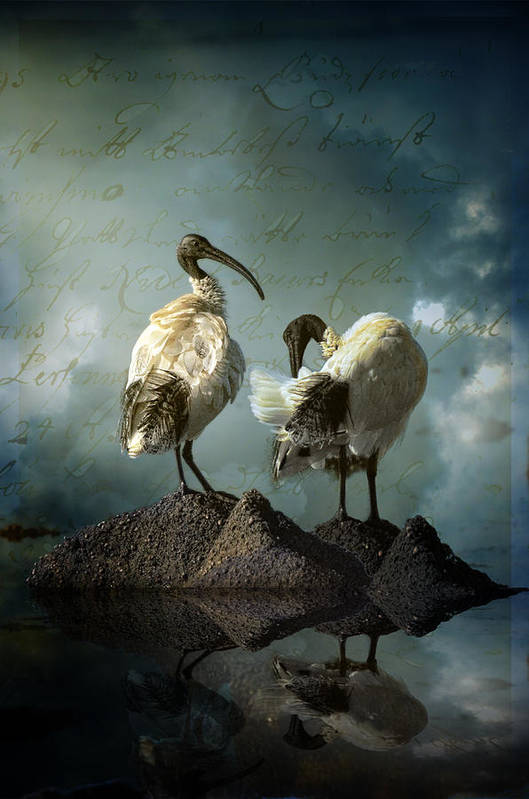 Birds Art Print featuring the photograph As If We Knew by Rodeo Rose