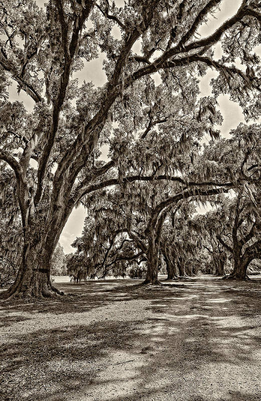 Evergreen Plantation Art Print featuring the photograph Back To The Future Sepia by Steve Harrington