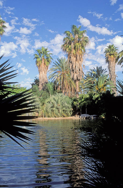 Palm Trees Art Print featuring the photograph Oasis by Daniel Blatt