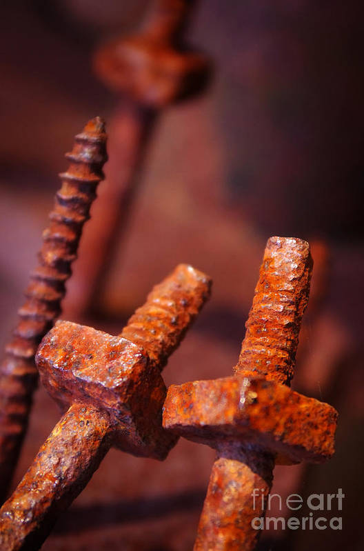 Bolt Art Print featuring the photograph Rusty Screws by Carlos Caetano