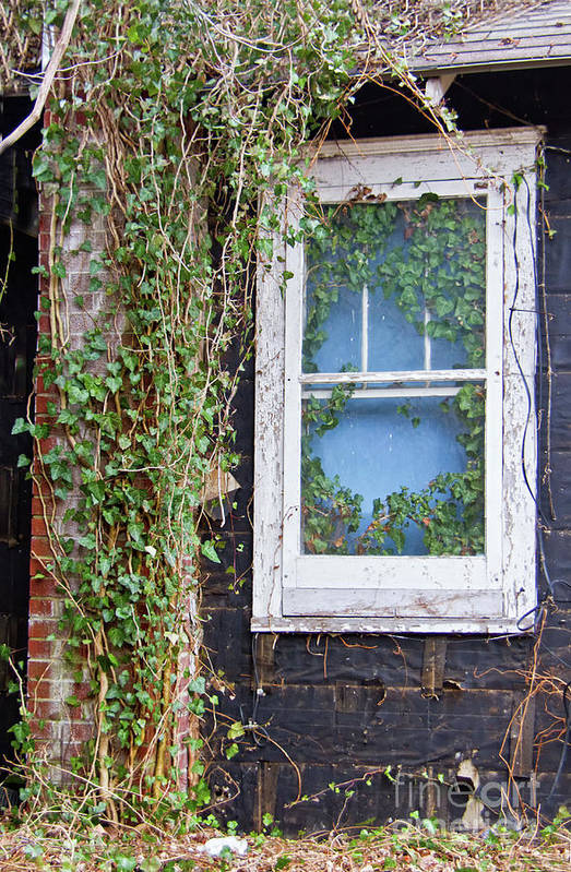 Vines Art Print featuring the photograph Vines by Carolyn Fox