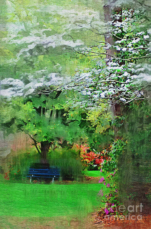 Dogwoods Art Print featuring the photograph Dogwood by Donna Bentley