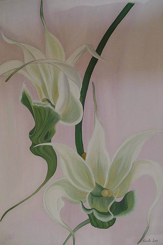 Marinella Owens Art Print featuring the painting Aeranthes Peyrot Orchide by Marinella Owens