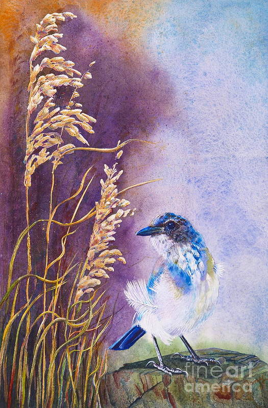 Scrub Jay Art Print featuring the painting Bad Feather Day by Jany Schindler
