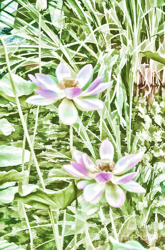 Blossom Pink Lotus Flower Art Print featuring the painting Blossom Pink Lotus Flower by Lanjee Chee