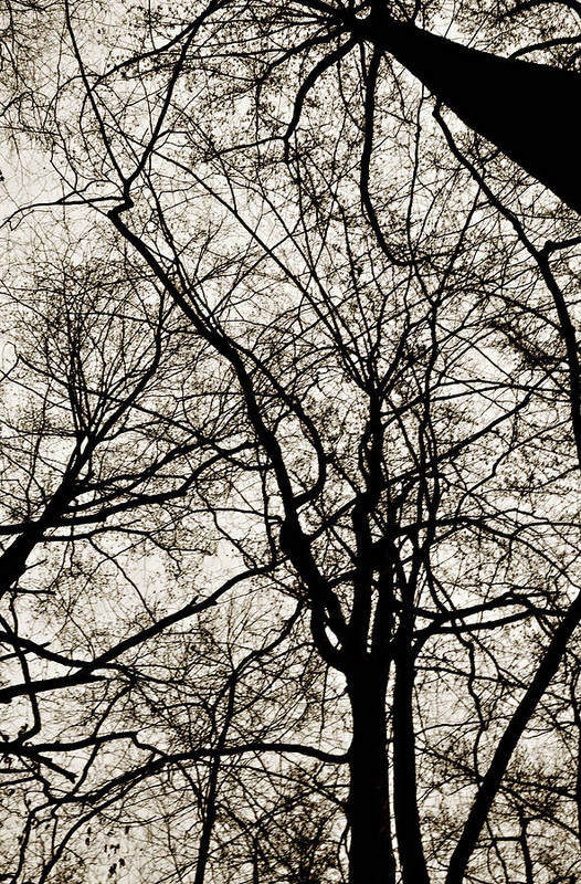 Nature Art Print featuring the photograph Branches Intertwined by Robin Lynne Schwind