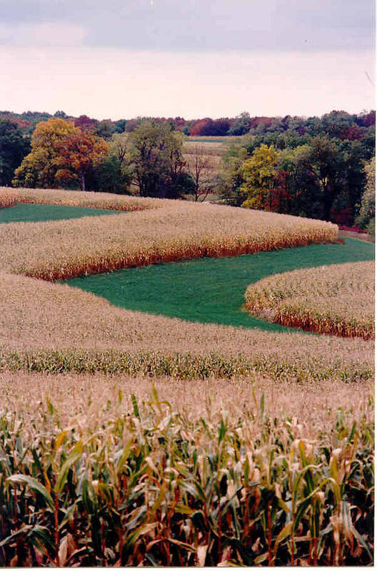 Photograph Art Print featuring the photograph Corn Field by William Burgess