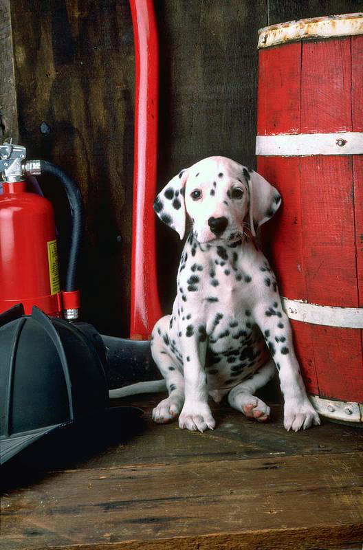 Dalmatian Puppy Fireman's Helmet Axe Barrel Art Print featuring the photograph Dalmatian Puppy With Fireman's Helmet by Garry Gay
