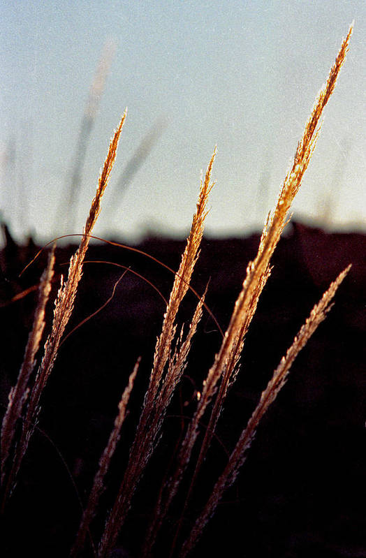 Grass Art Print featuring the photograph Glistening Grass by Randy Oberg