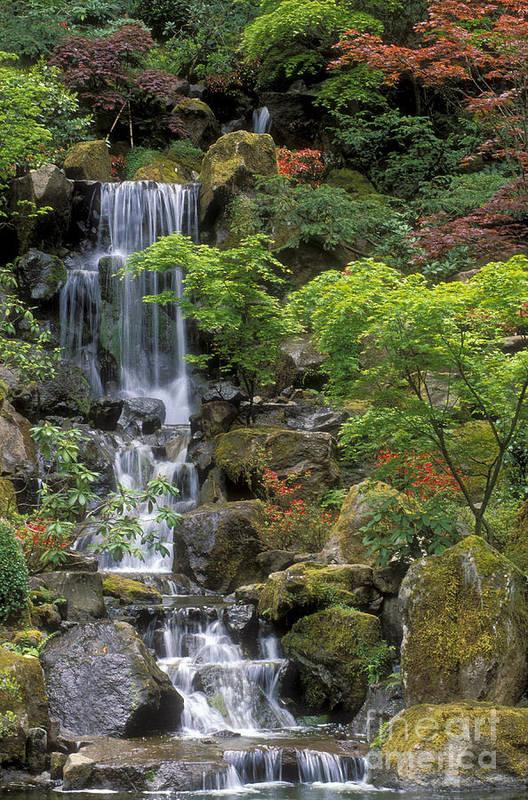 Waterfall Art Print featuring the photograph Japanese Garden Waterfall by Sandra Bronstein