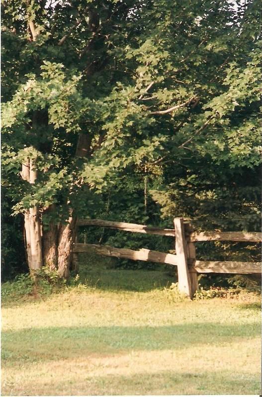 Trees Art Print featuring the photograph My Quiet Corner - Photograph by Jackie Mueller-Jones