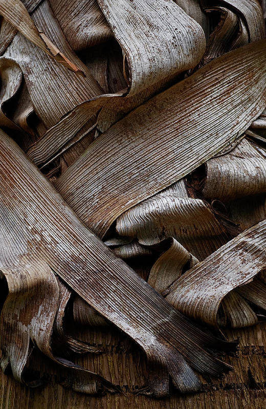 Bark Art Print featuring the photograph Paper Bark by Murray Bloom
