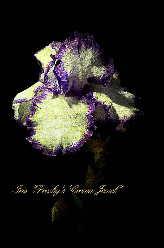 Agriculture Art Print featuring the photograph Presby's Crown Jewel Iris by John Trax