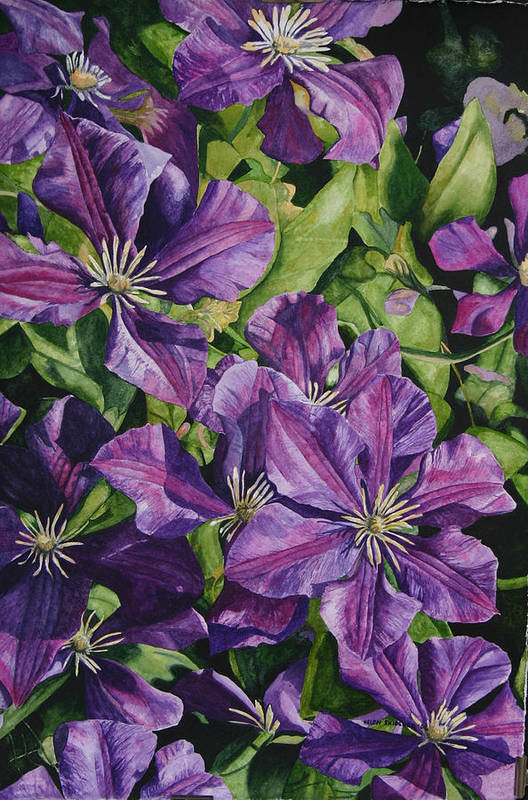 Clematis Art Print featuring the painting Purple Persuasion by Helen Shideler