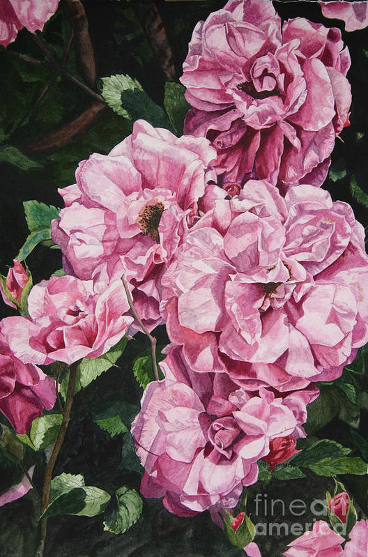 Floral Art Print featuring the painting Ramblin Rose by Helen Shideler