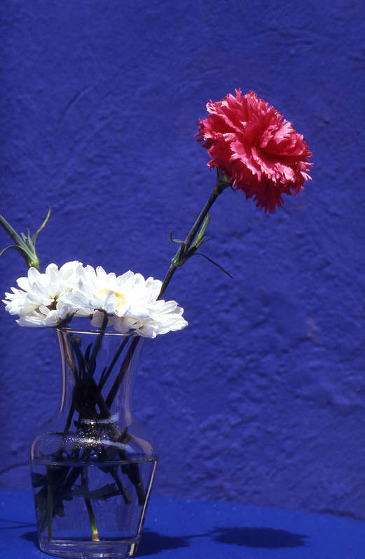 Blue; Bloom; Beauty In Nature; Botany; Carnation; Close-up; Close; Up; Crete; Color; Art Print featuring the photograph Red Carnation by Steve Outram