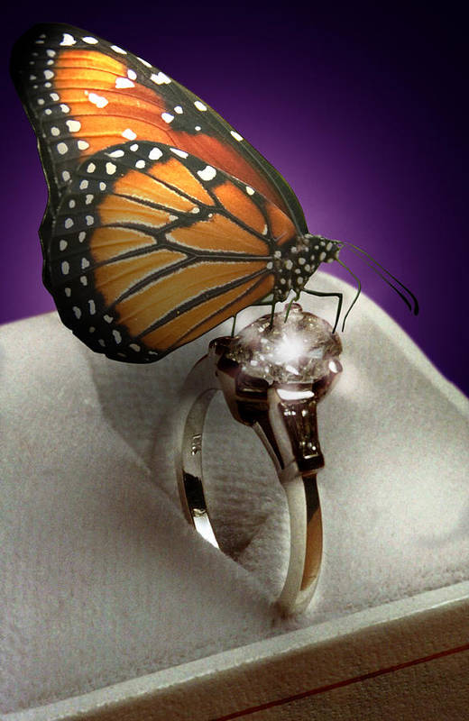 Fantasy Art Print featuring the photograph The Butterfly And The Engagement Ring by Yuri Lev