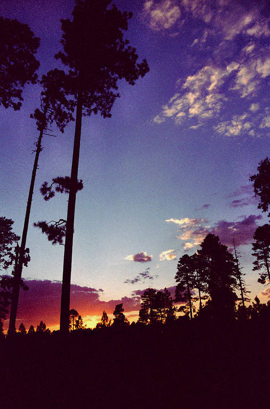 Arizona Sunset Art Print featuring the photograph Two Pines Sunset by Randy Oberg