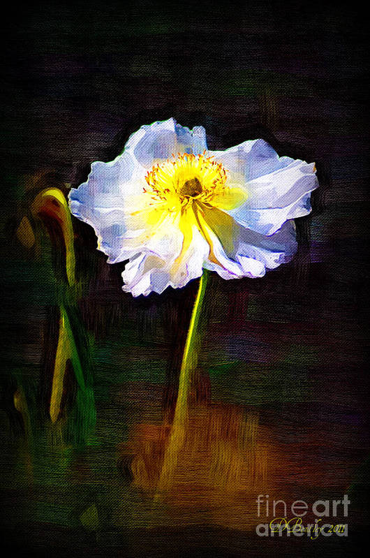 White Poppy Art Print featuring the photograph White Poppy by Donna Bentley