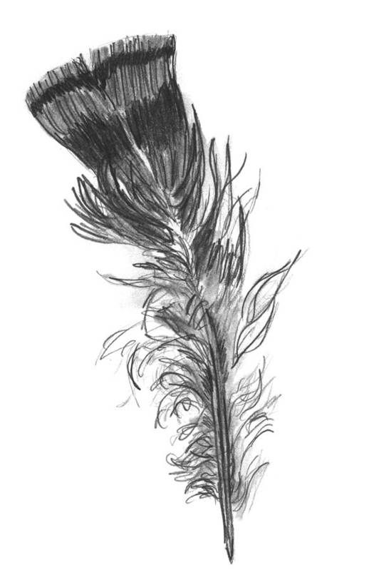 Wild Turkey Art Print featuring the drawing Wild Turkey Feather by Kevin Callahan