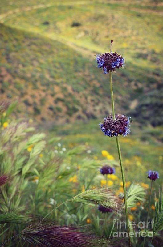 Wildflower Art Print featuring the photograph Wildflower by Kiana Carr