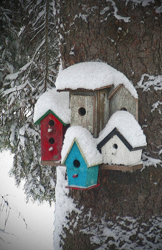 Winter Art Print featuring the photograph Winter Birdhouses by Tim Nyberg