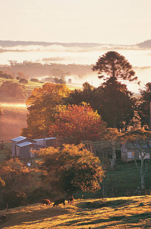 Tranquility Art Print featuring the photograph Morning Mist Over South Coast Farmland by Auscape / Uig