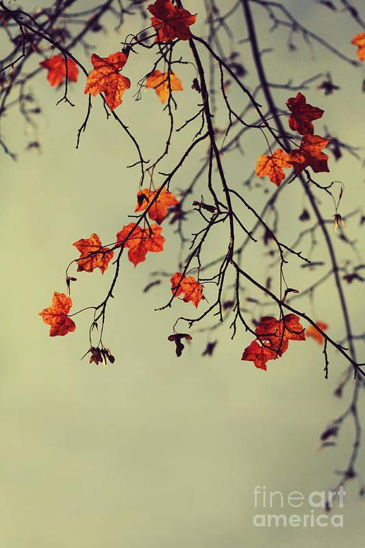Autumn Art Print featuring the photograph Autumn by Diana Kraleva