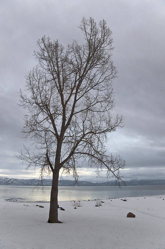 Tahoe Art Print featuring the photograph Bare Tree On A Wintery Tahoe Shoreline by Scott Lenhart