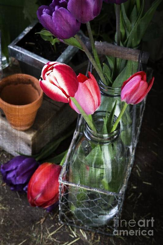 Barn Art Print featuring the photograph Beautiful Spring Tulips by Edward Fielding