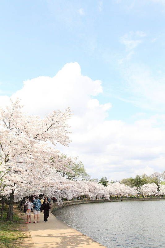 America Art Print featuring the photograph Cherry Blossoms - Washington Dc - 01131 by DC Photographer