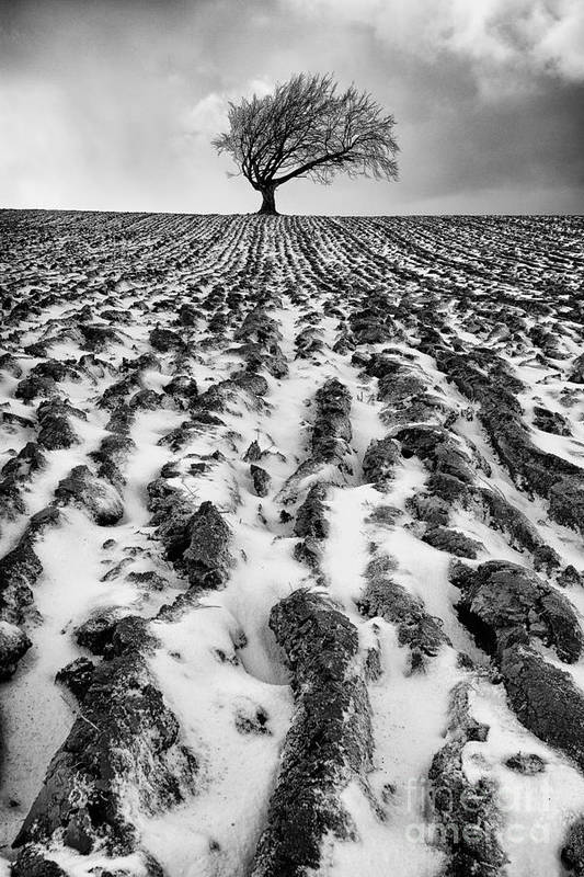 Snow Art Print featuring the photograph Lone Tree by John Farnan