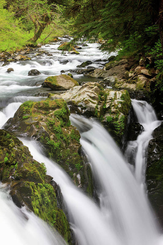 America Art Print featuring the photograph Lush Waterfall Olympic National Park by Tom Norring