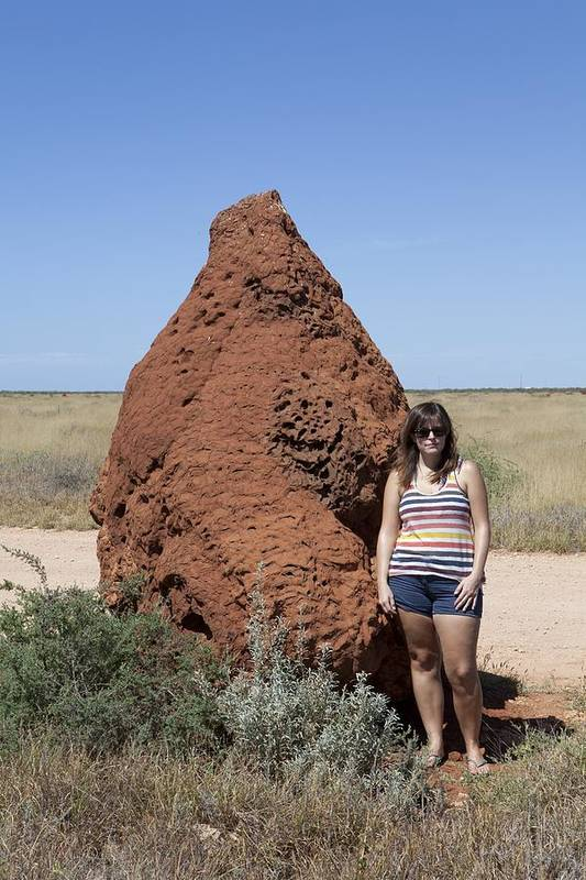 termite Nest Art Print featuring the photograph Termite Mound, Exmouth Western by Science Photo Library