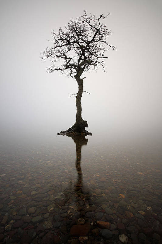 Tree Art Print featuring the photograph Tree by Grant Glendinning