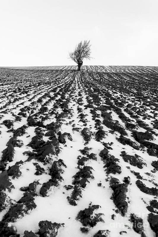 Snow Art Print featuring the photograph Tree In Snow by John Farnan