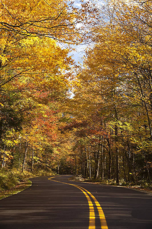 Road Print featuring the photograph Autumn Drive by Andrew Soundarajan