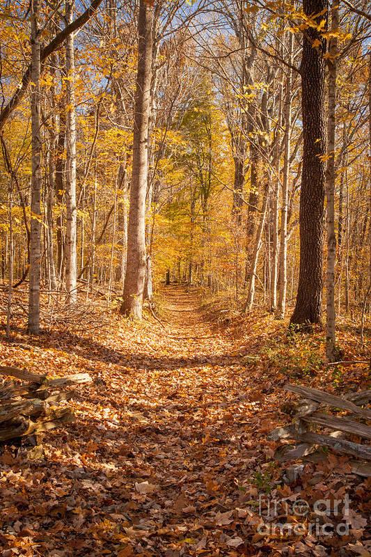 America Art Print featuring the photograph Autumn Trail by Brian Jannsen