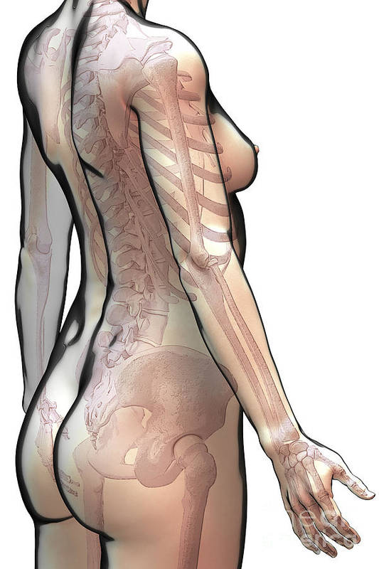 Digitally Generated Image Art Print featuring the photograph Bones Of The Upper Body Female by Science Picture Co