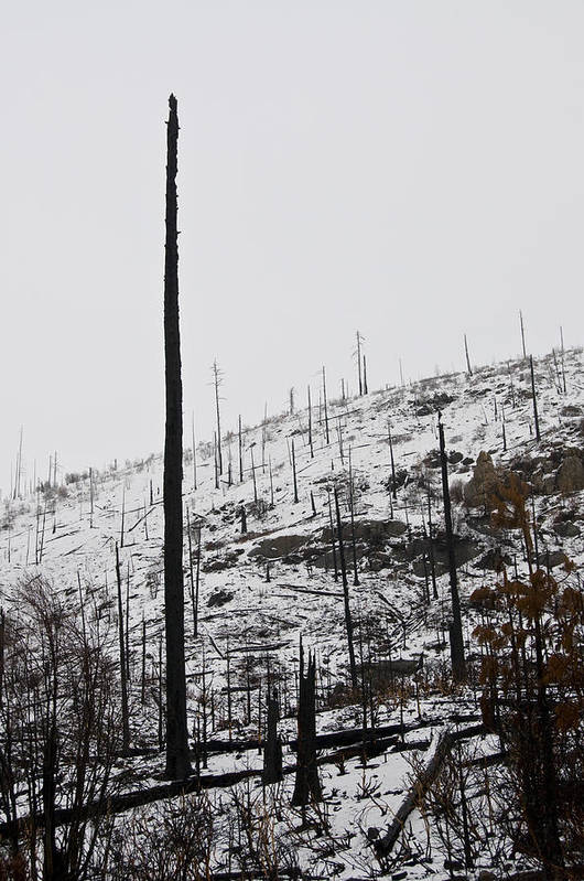 Winter Art Print featuring the photograph Charred Bones Of The Forest by Scott Lenhart