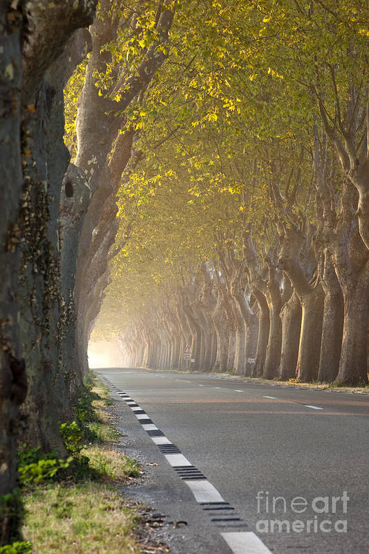 Tree Art Print featuring the photograph Saint Remy Trees by Brian Jannsen