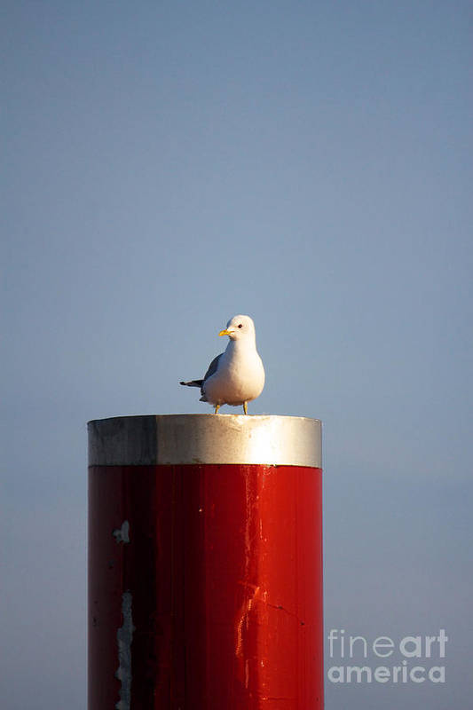Afternoon Art Print featuring the photograph Seagull Perched On Red Column by Jannis Werner