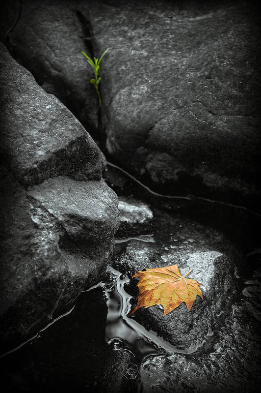 Leaf Art Print featuring the photograph A Leaf On The Rocks by Brian Archer
