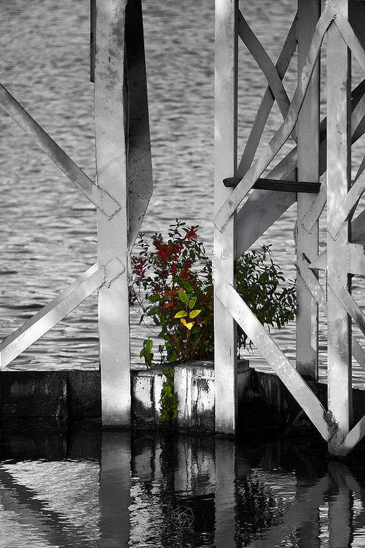 Lonely Art Print featuring the photograph A Lonely Shrub by Brian Archer